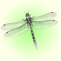 Dragonfly. Vector Abstract  Concept.