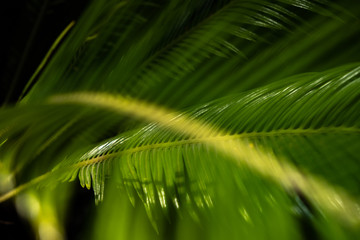 Palm leaf dark green abstract blurred background