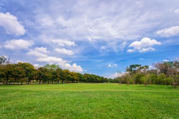 Beautiful park scene in public park with green grass field,