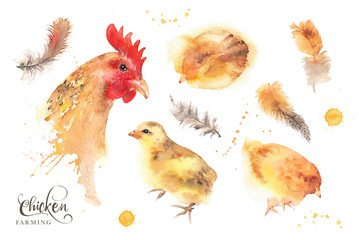 Isolated watercolor hen, chicken and feathers illustration set.