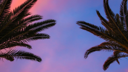 Palm tree with beautiful pink and blue sky at sunset. Concept for traveling to tropical / exotic places, vacation and holiday.