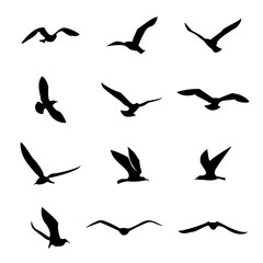 vector seagull / sea gull / seabird flying black silhouette set. Drawing free flight group icon. Freedom print art. Marine birds flock illustration isolated on transparent background