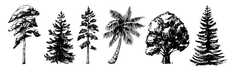 Sketches of different types of trees