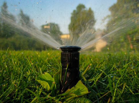 watering the grass4