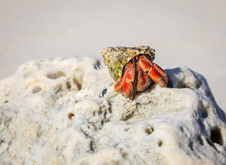 Hermit crab on a rock