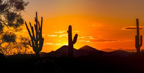 Photo sur Aluminium Cactus Desert Sunset