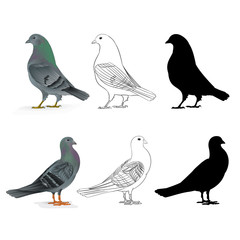 Pigeons Carriers  domestic breeds sports birds natural and outline and silhouette vintage  set two vector  animals illustration for design editable hand draw