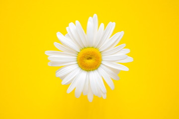 One daisy on a yellow background. Summer background. Flat lay, top view, copy space