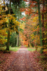 Path full of leaves in old forest at autumn, Poland