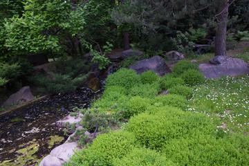 Green plants in Japanese garden