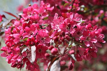 Rosa Blumen und Baum