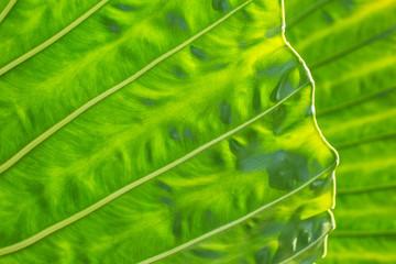 Palm frond leaf detail, Seminyak, Bali, Indonesia