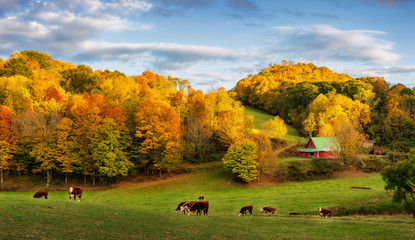 Autumn Appalachian farm at the end of the day - cows on back roads near Boone North Carolina Wall mural