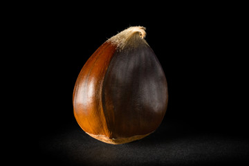 Still life of one chestnuts on a black background.
