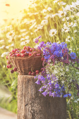 Beautiful spring background with cherries and flowers. Sunlight, sunset.
