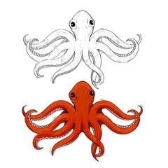 Octopus. Hand drawn sketch