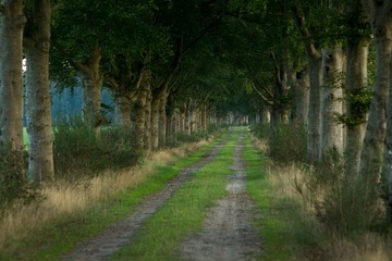 Lane in the Netherlands