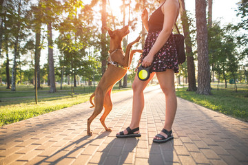 Girl and dog play on the alley in the park on the background of the sun. Dog jumps at the girl while walking in the park. Morning walk with a pet in the outdoors. Magyar vizsla.