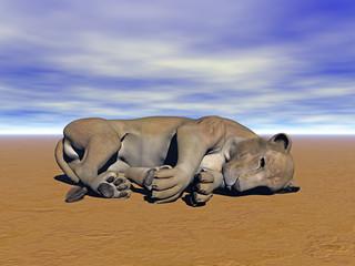 Löwe schläft