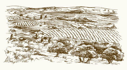 Italian landscape with vineyard and olive trees. Hand drawn vector illustration.