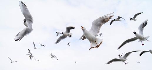 energetic lake gull