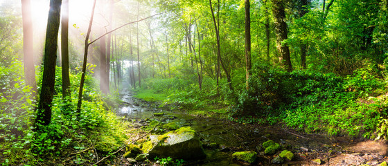 Wall Mural - Sunrise in the forest with bright sunbeams shining through the trees