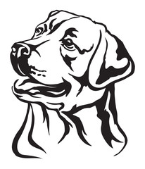 Decorative portrait of Labrador Retriever vector illustration