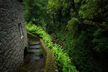 Escaleras naturaleza