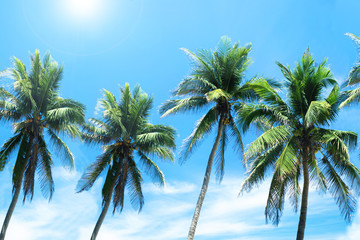Palm trees on the background blue sky.Vacation holiday background.