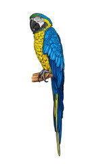 Hand-drawn blue-yellow parrot ara on a branch. Vector illustration.