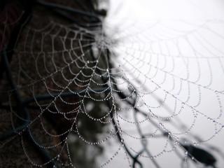 Spinnennetz im Morgentau