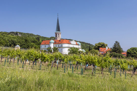 View of Palace, church and vineyards of Gumpoldskirchen (Austria)
