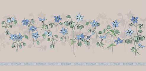 Borago - medicinal plant. Blue flowering of cucumber grass. Garden flowers.