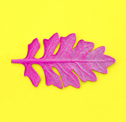 Pink leaf on yellow paper background. Fashion minimal pop art style.