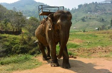 Ele é Elefante