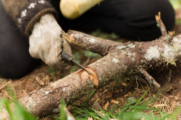 Using a stick hammer and knife to chop through a thick branch in the forest