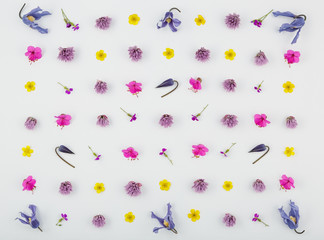 Top view of a flower composition on a white background. A pattern of flowering buds of garden plants