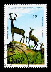 Deer, bronze statue, 55 years Zoological Park of Havana serie, c