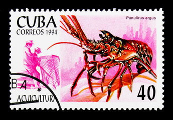 Caribbean Spiny Lobster (Panulirus argus), Aquaculture serie, ci