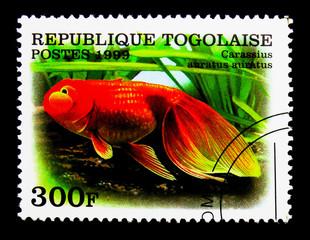 Pearlscale Veiltail Goldfish (Carassius auratus), Goldfish serie