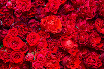 Celebratory background of beautiful red roses. Flowers