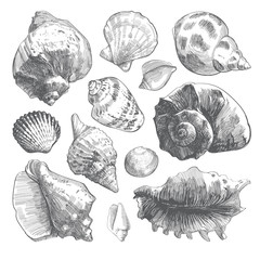 Sea shells sketch set. Grey doodle seashell silhouettes isolated on white background. Vector ocean life hand drawn illustration