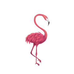 Flamingo over White
