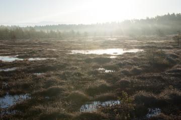 Ritassaarensuo - Misty sunrise