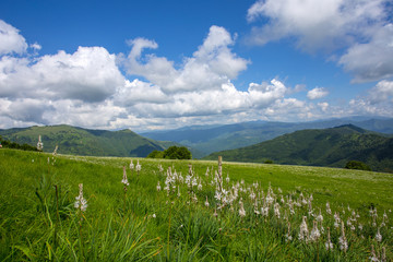 Meadow expanses with asphodels and narcissus flowers under a blue sky with clouds.