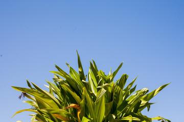 planta verde sobre cielo azul