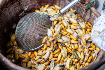 Close Up Group of Chrysalis or Pupae Boiled in the Basket after make Silk Thread Before send to make a Food