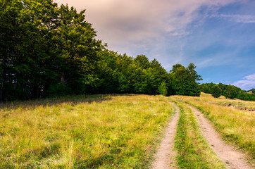 road through grassy meadow in to the beech forest. lovely summer scenery of Carpathian mountainous area