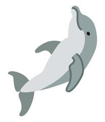Dolphin - sea life