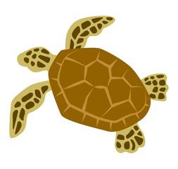 Sea turtle - sea life